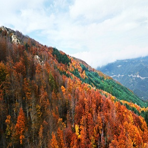 Parque Natural del Montseny (Cataluña)