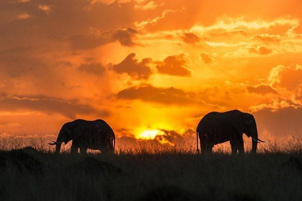 Parque Nacional Masai Mara (Kenya)