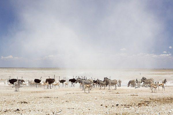 Parque Nacional de Etosha (Namibia)