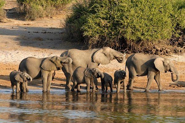 Delta del Okavango (BotsuWana)