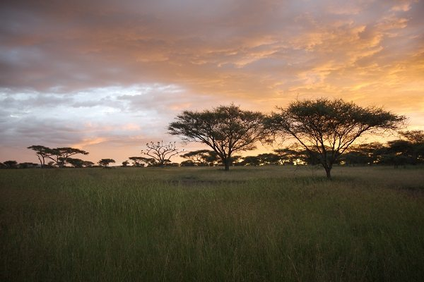 Parque Nacional Serengeti (Tanzania)