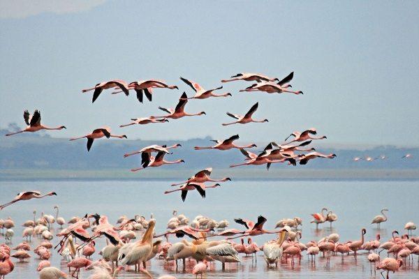 Parque Nacional del Lago Nakuru (Kenya)