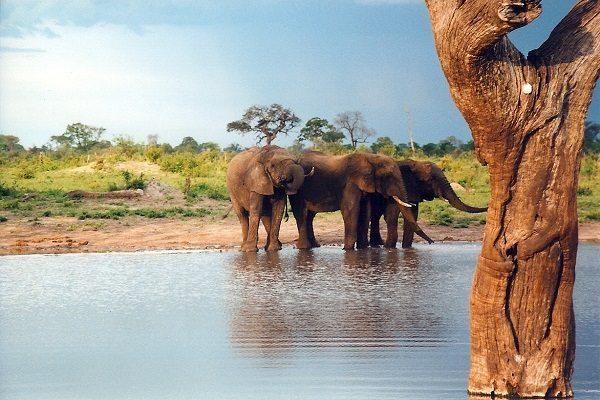 Parque Nacional Hwange y Cataratas Victoria (Zimbabwe)
