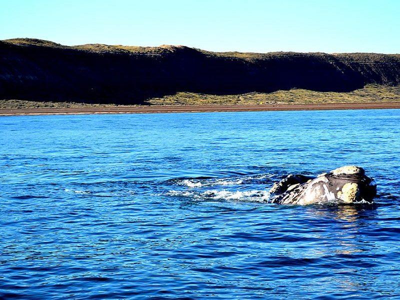 Península Valdés, Patagonia (Argentina)