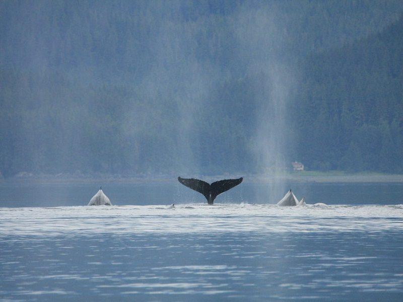 Glacier Bay, Alaska (Estados Unidos)