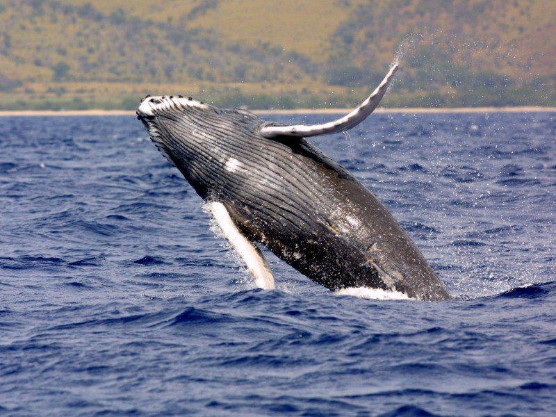 Hawai'i (Estados Unidos)