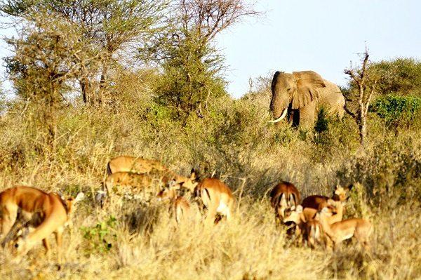 Parque Nacional de Amboseli (Kenia)