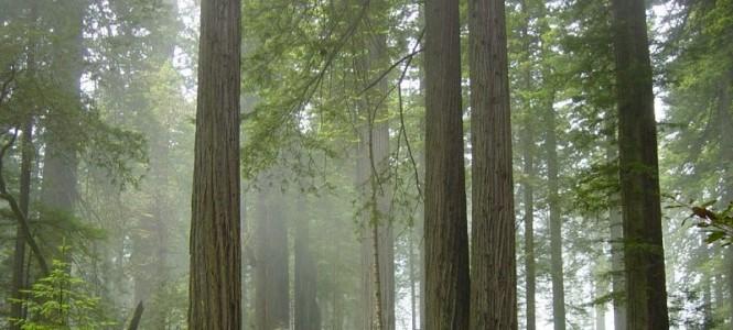 Parque Nacional de Redwood